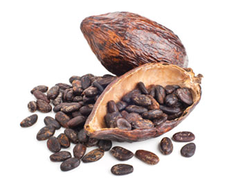 raw cocoa beans and pod